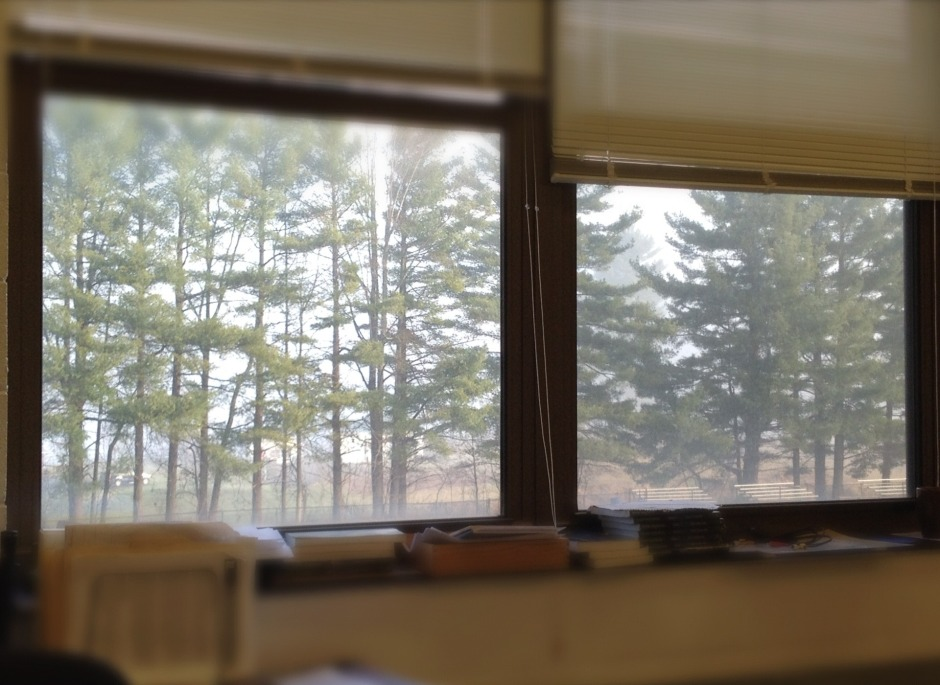 like something just beyond the window, the trees, the morning fog