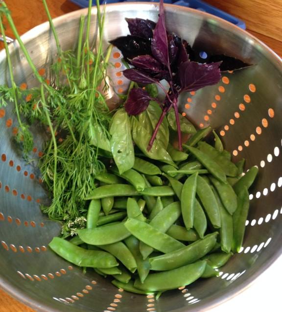 Sugar snaps and herbs.
