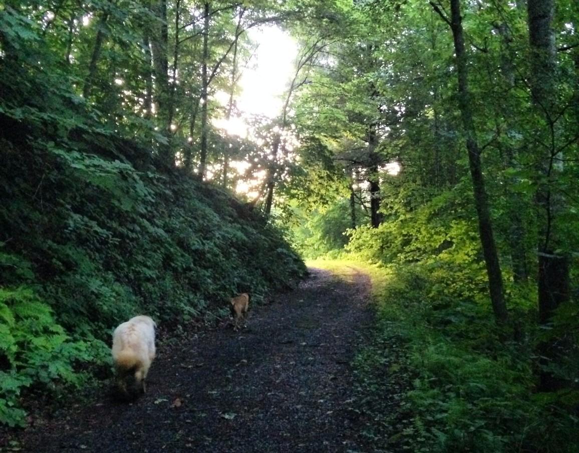 Evening walk up the graveyard hill.